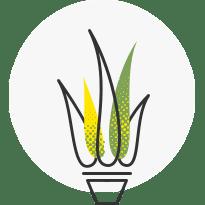 Seed Supply