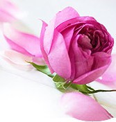 Абсолют розы в масле жожоба (3%)