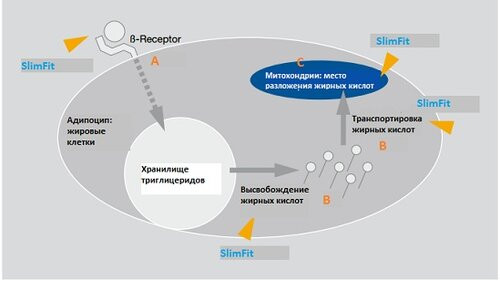 Антицеллюлитный актив SlimFit - slimfit 1 - 3